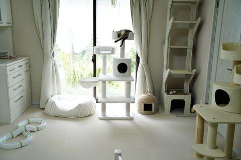 f:id:sangoruka_cats:20200625181406j:plain