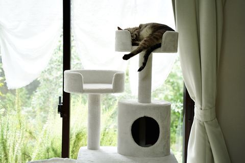f:id:sangoruka_cats:20200625181420j:plain