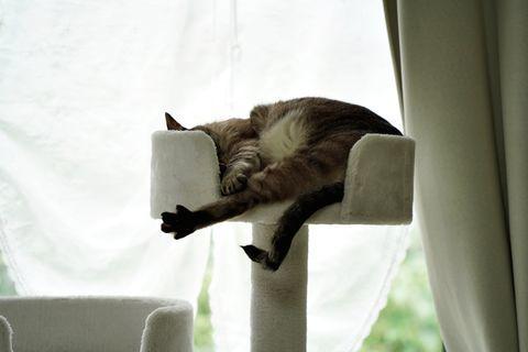 f:id:sangoruka_cats:20200625183154j:plain