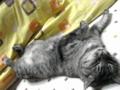 眠り猫 1