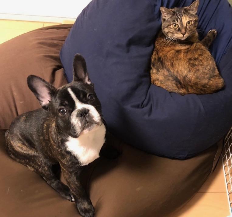 犬と猫の共存?