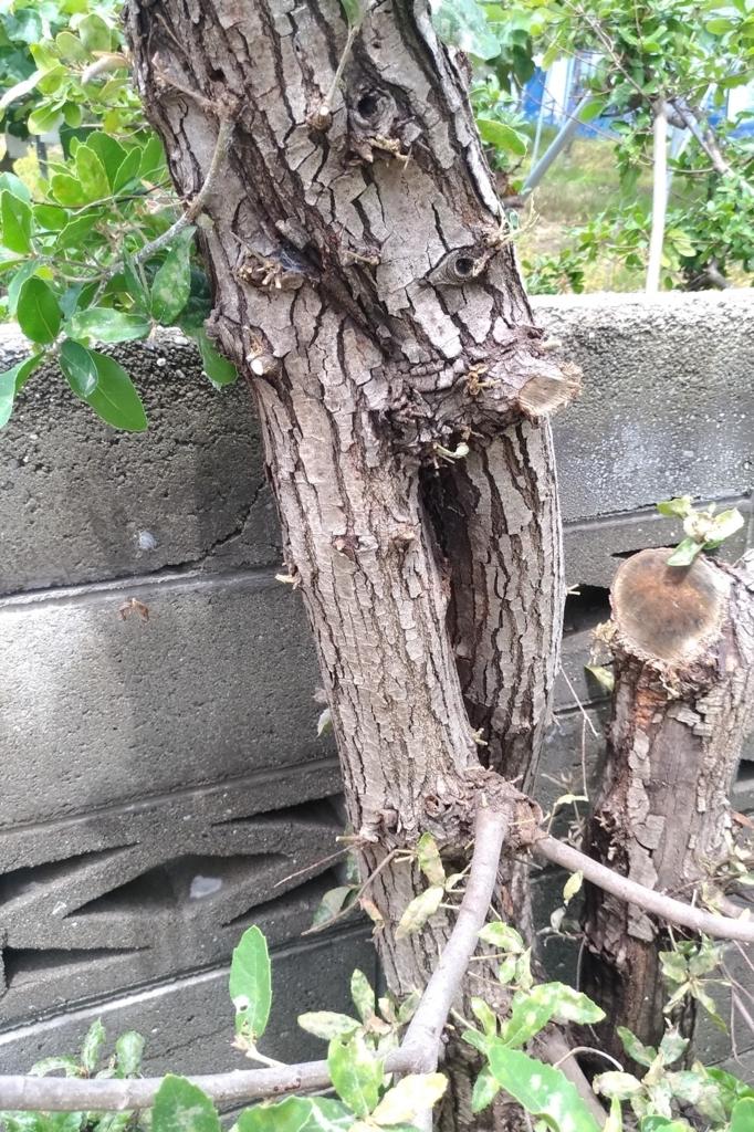 f:id:sankairenzoku10cm:20180630110837j:plain