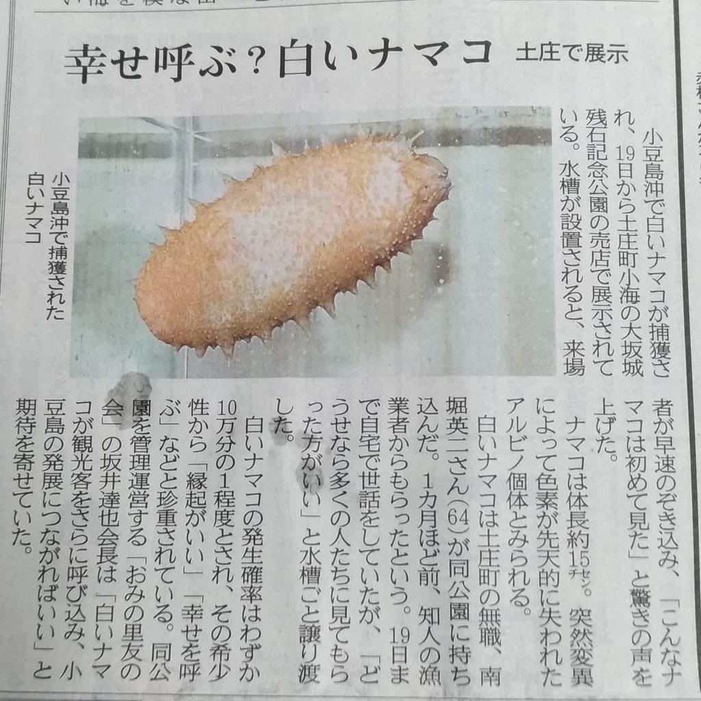 f:id:sankairenzoku10cm:20190220194635j:plain