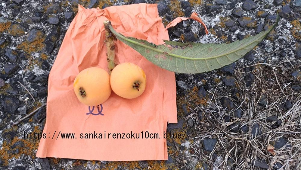 f:id:sankairenzoku10cm:20190610093915j:plain