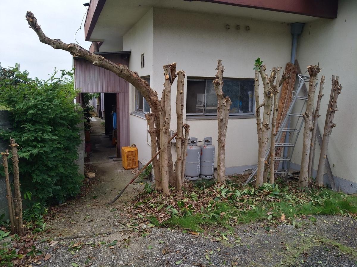 f:id:sankairenzoku10cm:20210705135022j:plain