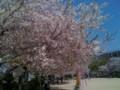 4月9日・大阪市浪速区・元町中公園