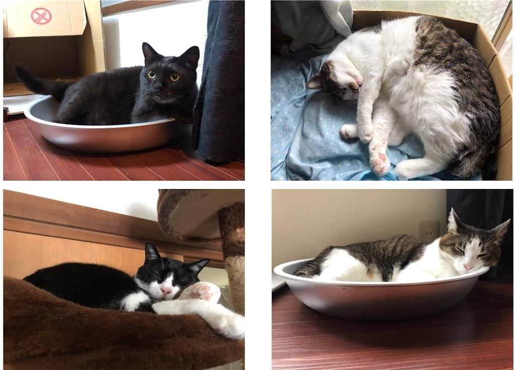 保護猫 四猫 多頭飼い