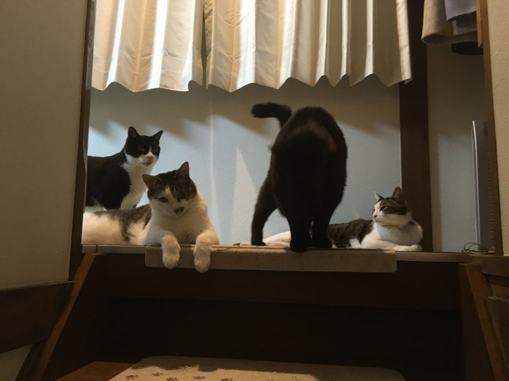 愛猫と愉しいおうち時間