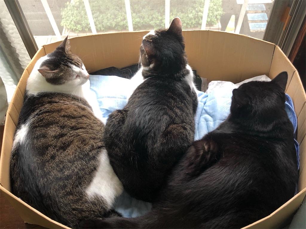 三猫ならんでニャルゾック中