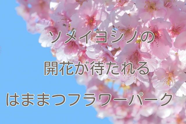 f:id:sannigo:20200324180327j:plain