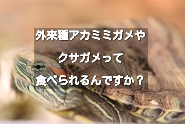 f:id:sannigo:20200409132841j:plain