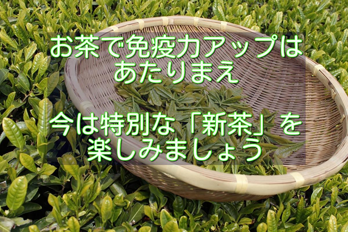 出し 緑茶 ガッテン ためして 水 効能