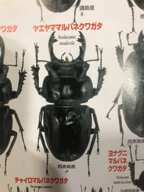f:id:sanosuke9991:20181119180749j:image