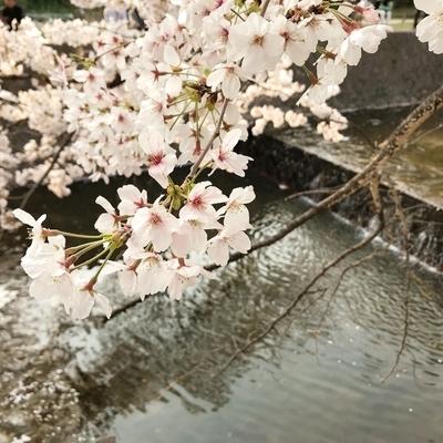 f:id:sanpo_kurashi:20190411001210j:plain