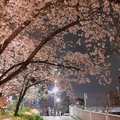 f:id:sanpo_kurashi:20200402024501j:plain