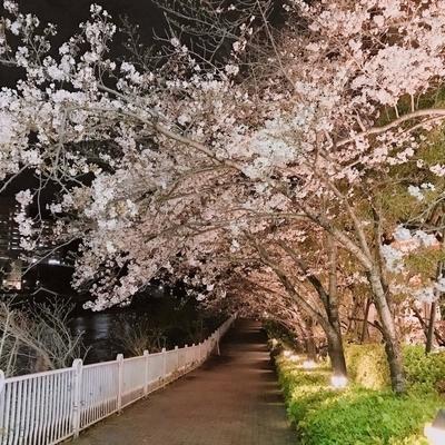 f:id:sanpo_kurashi:20200402024639j:plain