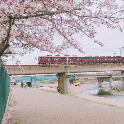f:id:sanpo_kurashi:20200413014656j:plain