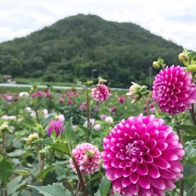 f:id:sanpo_kurashi:20200811004602j:plain