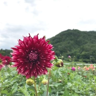 f:id:sanpo_kurashi:20200811004653j:plain