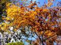 [紅葉]日光山内の紅葉