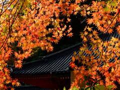 輪王寺法華堂と紅葉