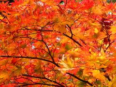 輪王寺慈眼堂の紅葉