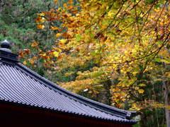 輪王寺開山堂と紅葉