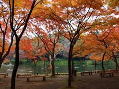 小石川後楽園の紅葉林