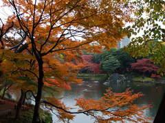 紅葉の小石川後楽園