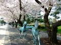[桜]十和田市官庁街通り駒街道