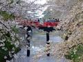 [桜]弘前城下乗橋