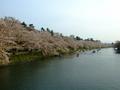 [桜]弘前城西堀とサクラ