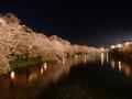 [夜景][桜]弘前城西堀と夜桜