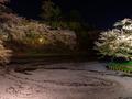 [夜景][桜]水堀に渦巻くサクラの花びら