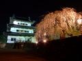 [夜景][城郭][桜]弘前城天守と御滝桜ライトアップ