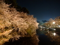 [夜景][桜]弘前城中堀の夜桜