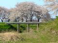 [桜][城郭]浪岡城の木橋