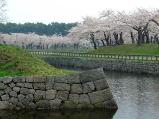 五稜郭半月堡の石垣と桜林