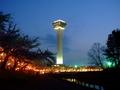 [夜景][桜]五稜郭タワーと夜桜