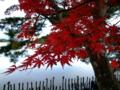 [紅葉]南湖公園の紅葉