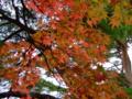 [紅葉]南湖公園