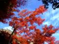 [紅葉]旧有備館の紅葉