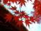 旧有備館の紅葉