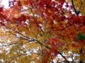 [庭園][紅葉]旧有備館の紅葉