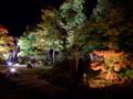 [夜景][庭園]円通院庭園ライトアップ