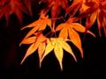 [夜景][紅葉]円通院の紅葉ライトアップ