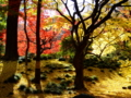 [紅葉][庭園]六義園の紅葉