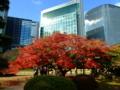 [庭園][紅葉]浜離宮恩賜庭園の紅葉