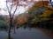 散ってしまった小石川後楽園の紅葉林