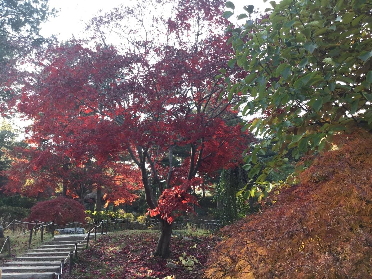 アチムゴヨ樹木園